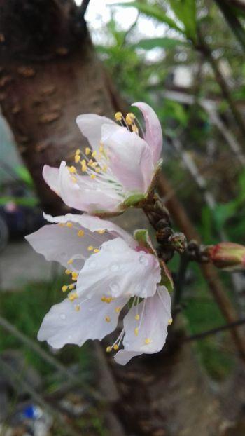 Nature Plant Plants Flores árbol Mexico Matamoros Tamaultimas Flowers