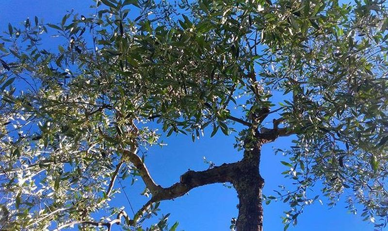 Giornate di solo Relax Intothenature Relaxing Relaxingday Sky Skyporn Noclouds Nature Naturelover Ig_sky Ig_siena Tuscany Siena Igers Vivoinunpostomeraviglioso