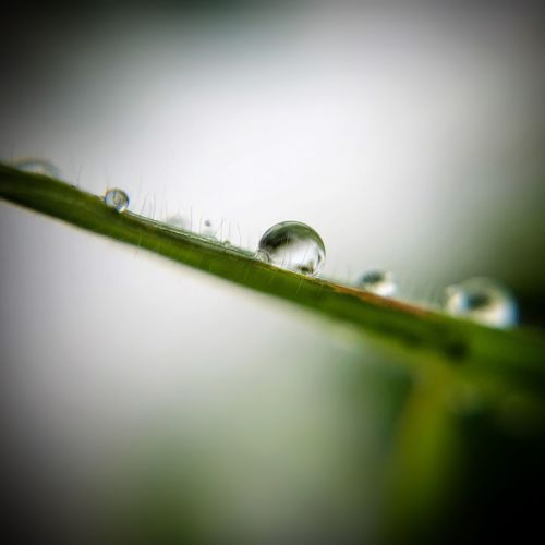 Vízcsepp... Drop Nature Selective Focus Green Color Fragility Close-up Macro Beauty In Nature No People Outdoors Water