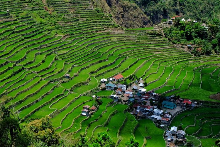 High Angle View Of Rice Terrace