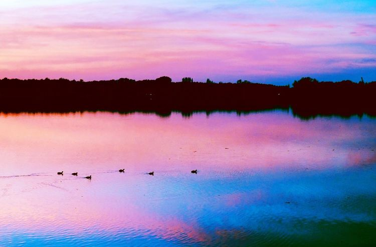 Beauty In Nature Silhouette Sunset Scenics Nature Sky Tranquility EyeEm Best Shots Eye4photography  EyeEmNewHere The Places I've Been Today Best EyeEm Shot EyeEmBestPics Silhouette Tranquil Scene Water Outdoors Lake Cloud - Sky Bird No People Animals In The Wild Tree Day Animal Themes