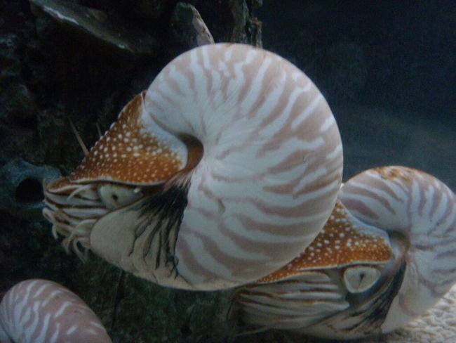 Taking Photos Snail Aquarium Aquaria Klcc