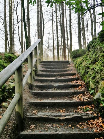 Steps And Staircases No People Beauty In Nature The Way Forward Nature Forest Forest Path Forest Walk Tollymore Forest Park Ireland🍀 Northern Ireland