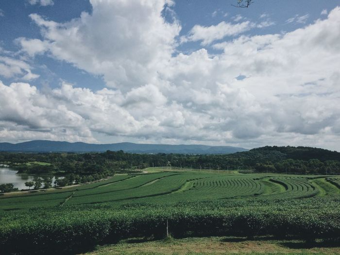 Agriculture Cloud - Sky Environment Farm Field Green Color Landscape No People Outdoors Scenics - Nature Sky Tranquil Scene