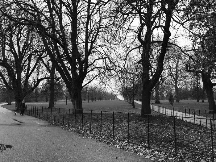 London, Hyde