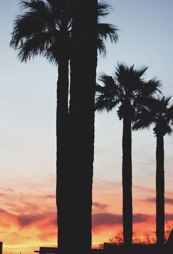Sunset palms Arizona Beauty Views Palm Tree Nature Sunset Sky Silhouette Tree Palm Tree Plant Tropical Climate Beauty In Nature Tranquility Scenics - Nature Outdoors