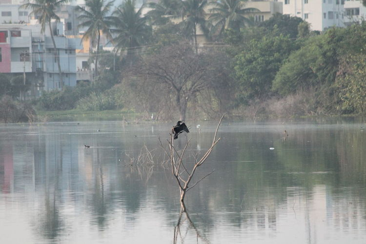 Architecture Bird Bird On Tree Birds Image Birds Shadow Branch Built Structure Day Fish Fish Catcher Birds Flood Green Leafs Lake Leaf Nature No People Outdoors Reflection Shadow Sky Tree Water Waterfront