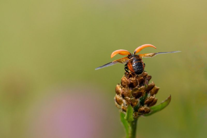 ich heb ab 🐞😊 Ladybug Schleswig-Holstein Sherleben Mutschekiepchen Marienkäfer EyeEm Selects Animal Themes Invertebrate Insect Animal Animals In The Wild Animal Wildlife Focus On Foreground Macro One Animal Nature Beauty In Nature