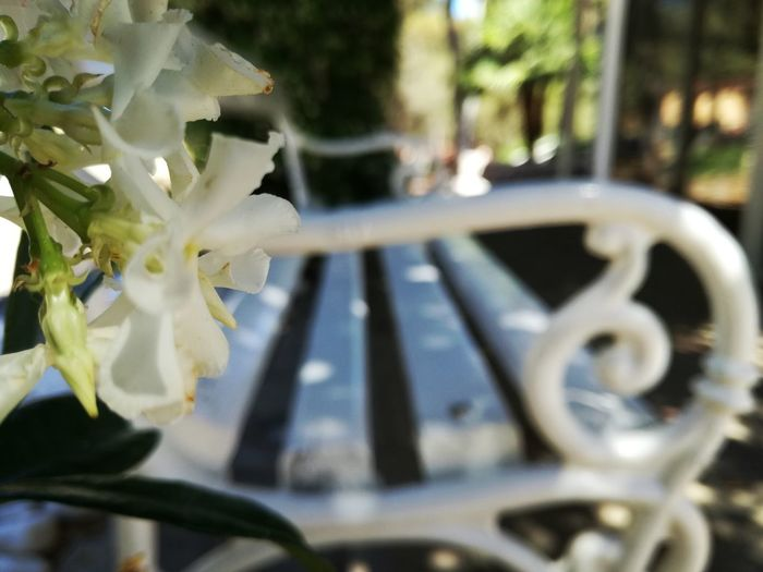 Miss you 💚 Outdoors No People Day White Bench Flower White Flower Romantic Togetherness Love Feeling Romantic Place Softness Enjoying Life Married Wedding Friendship Emotion Peace Amorous First Love Eternal Love Remembrance Unforgettable