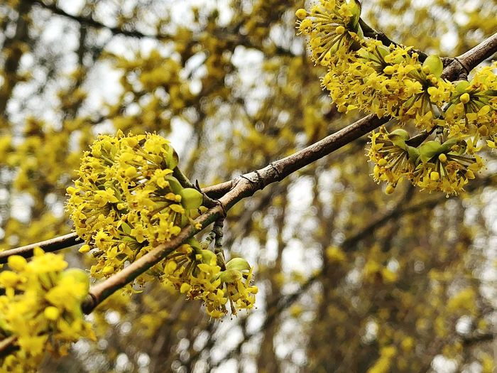 Plant Yellow Tree Flower Growth Flowering Plant Branch Beauty In Nature Focus On Foreground Nature Low Angle View Day Fragility Freshness No People Close-up Vulnerability  Tranquility Blossom Outdoors Springtime Flower Head Lichen Spring