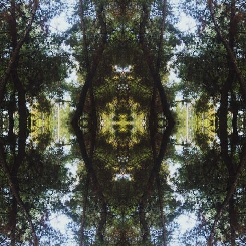 Playing with mirror effect Tree Forest Day Nature Outdoors Symmetry No People Mirror Effect Mirror Edit EyeEmNewHere