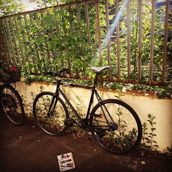 Bike Bilf Fixi Fixed Fixedgear Brakeless Nobrakes Cantstop Sunny Sunnyday Morning Spring Summer Train Trainstation