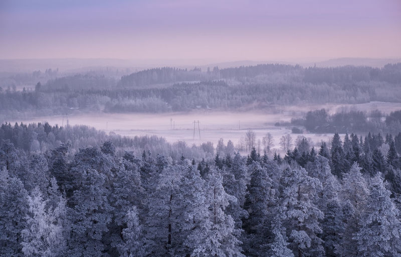 Winter landscape with frosty trees and foggy mood at evening light in Finland Evening Light Finland Frost Moment Of Silence Nature Pine Pink WoodLand Atmospheric Mood Beauty In Nature Cold Temperature Fog Hazy  Landscape Mist Nature No People Outdoors Scenics Sunrise Sunset Tranquil Scene Tranquility Tree Violet Shades Of Winter