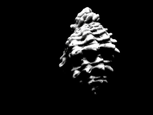 Minimalism Coquillages Et Crustacés Sound Edit For A Friend 🙏🎨