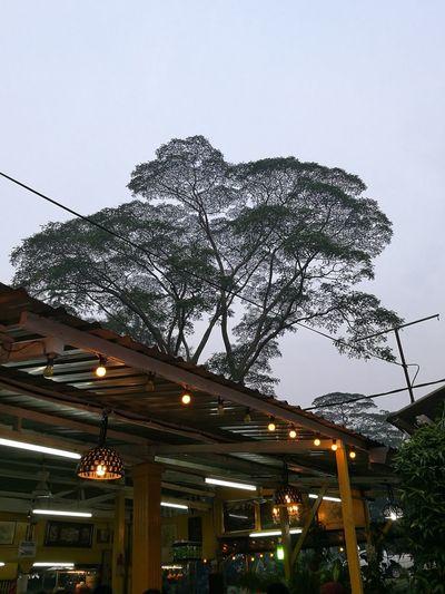 Tree Providing Great Shades Rising Towards The Sky Satay And Mee Rebus Johor Bahru