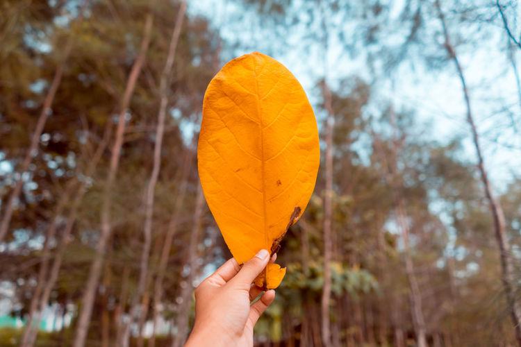 Person holding orange leaf