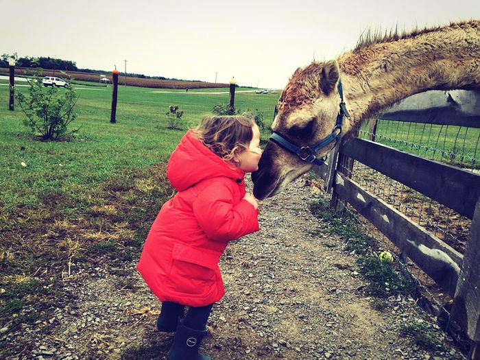 Camel Camels Gallrein Farms Kisses❌⭕❌⭕ Kiss Kids Being Kids Kisses Camelcrush Kiss Kiss Besos