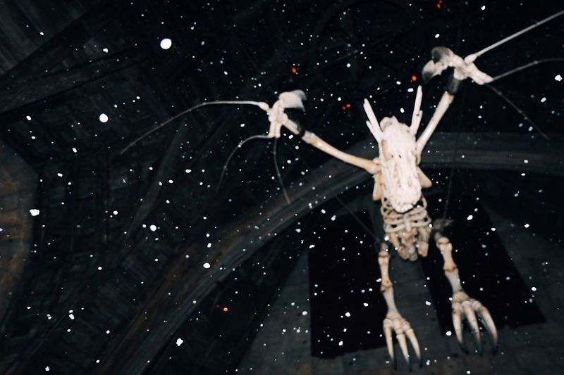 Time freeze Low Angle View Spider Web Nature Fragility Outdoors Spider Snowing Close-up No People Beauty In Nature Night Animal Themes Sky Harrypotter USJ Horror Scary Skeleton Halloween Flying EyeEmNewHere