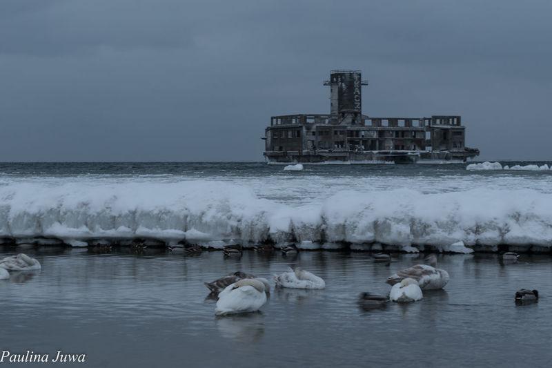 Sea And Sky Sea Trojmiasto Poland Gdynia Wintertime Winter Birds EyeEmNewHere