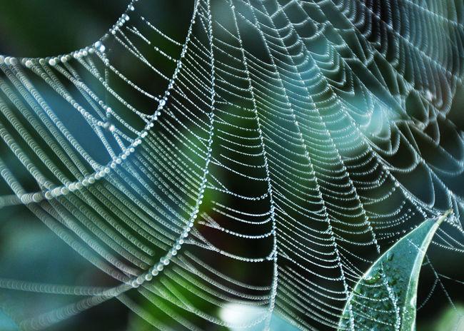 Nature Spidersweb