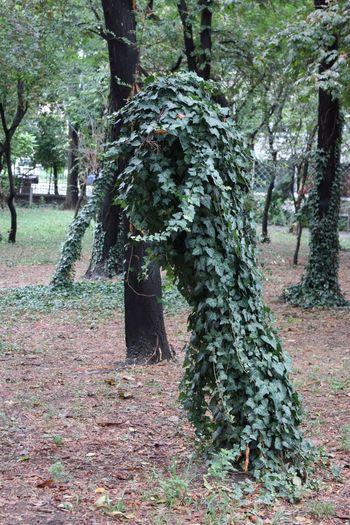 Tree Porn Tree