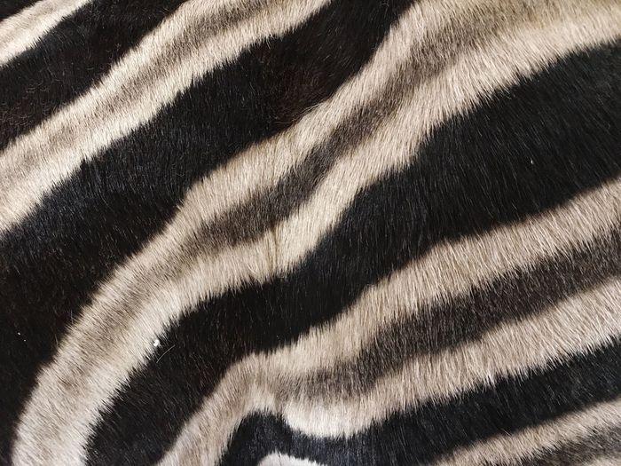 Animal Skin Zebra Skin Fur Animal Fur Zebra Pattern Zebra Print Zebra Stripes Zebra Full Frame No People Pattern High Angle View Backgrounds Day White Color Textured