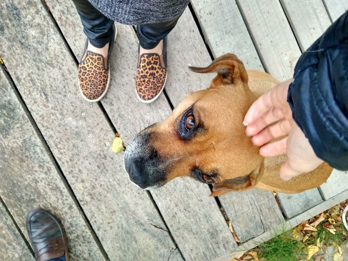 EyeEm Selects Pets Dog One Animal Domestic Animals Human Body Part Low Section Day High Angle View Mammal One Person Outdoors Human Leg Leisure Activity Real People Women Men People Adult Friendship Human Hand Be. Ready.