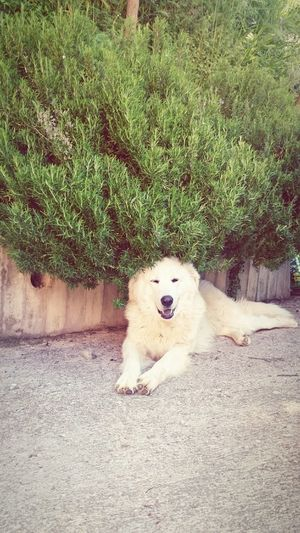 Il cane rosmarino. Dogslife Dog Dog Love Country Life Countrylife Hello World FUNNY ANIMALS Funny Moments In My Place In My Garden