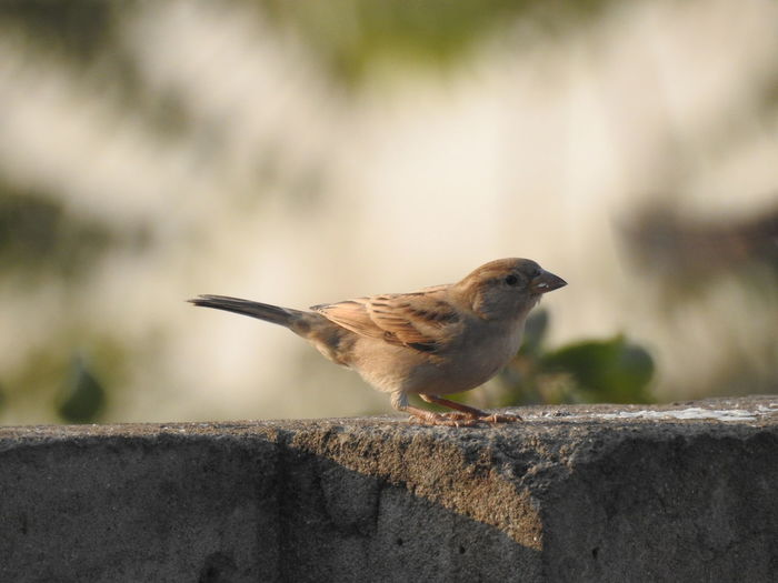 Side View Of A Bird Against Blurred Background