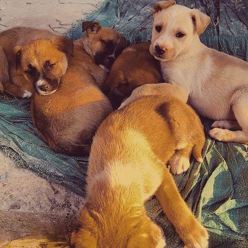 Patatini Cuccioli Crescita Dolciosi monellini wolf littledogs lovely pretty
