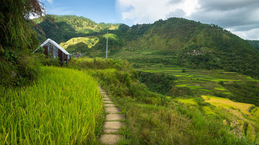 Vibrant green rice field and rustic barn in mountain province Banaue Barn Bontoc Cabin Golden Green Green Field Green Fields Harvest Ifugao It's More Fun In The Philippines Lush Maligcong Mountain Scenery Paradise Paradise On Earth Pathway Philippines Rice Rice Field Stone Path Stones Terrace Terraces Walkway
