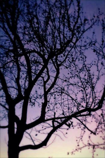 Winter Magic Hour