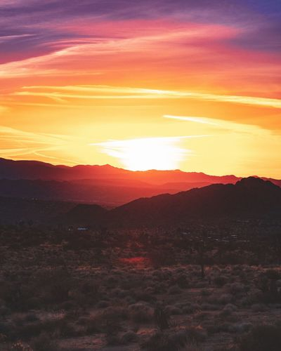 Sunset over Joshua tree EyeEm Selects EyeEm Best Shots Joshua Tree National Park Sunset Sunset Scenics - Nature Sky Beauty In Nature Environment Tranquil Scene Tranquility Landscape Mountain Sunlight Mountain Range Majestic