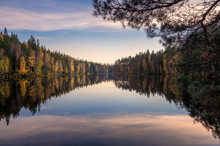 Scenic lake landscape with reflections and calm weather at autumn evening in Finland Tree Reflection Standing Water Lake Sky Tranquility Beauty In Nature Tranquil Scene Plant Scenics - Nature Waterfront Symmetry No People Idyllic Reflection Lake Outdoors Cloud - Sky Sunset Finland Calm Peaceful Autumn Fall Colors Pine Tree Evening Light