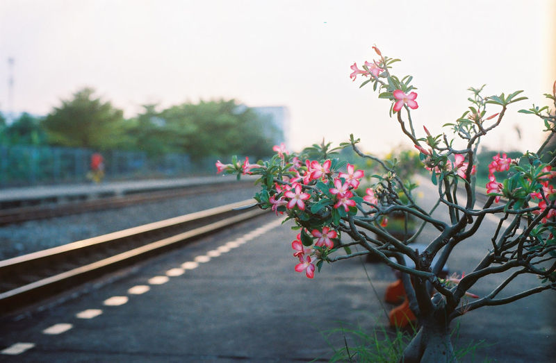 Close-up of flowering plants by railroad tracks against sky