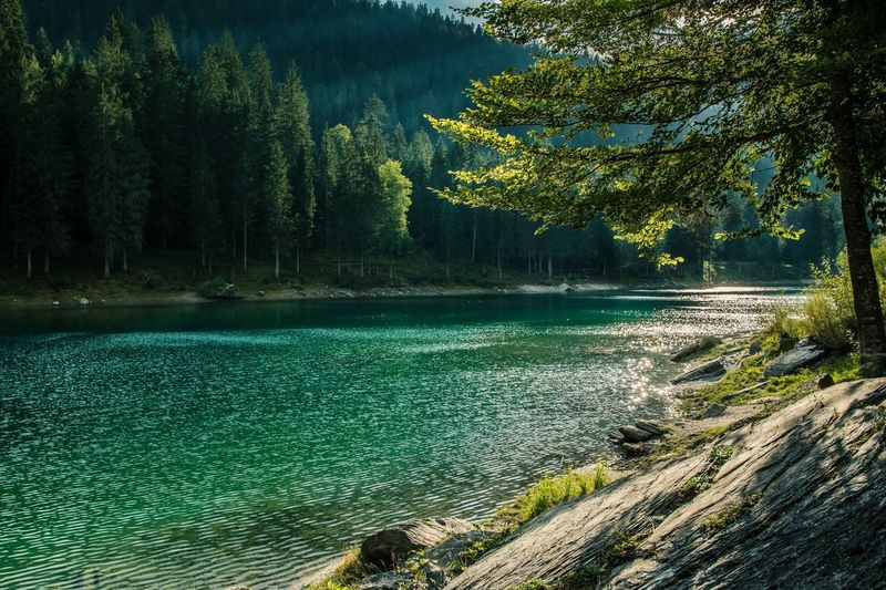 Summer in Switzerland. Took that picture last year Tree Nature Water Outdoors Tranquil Scene No People Lake Landscape Beauty In Nature Summer