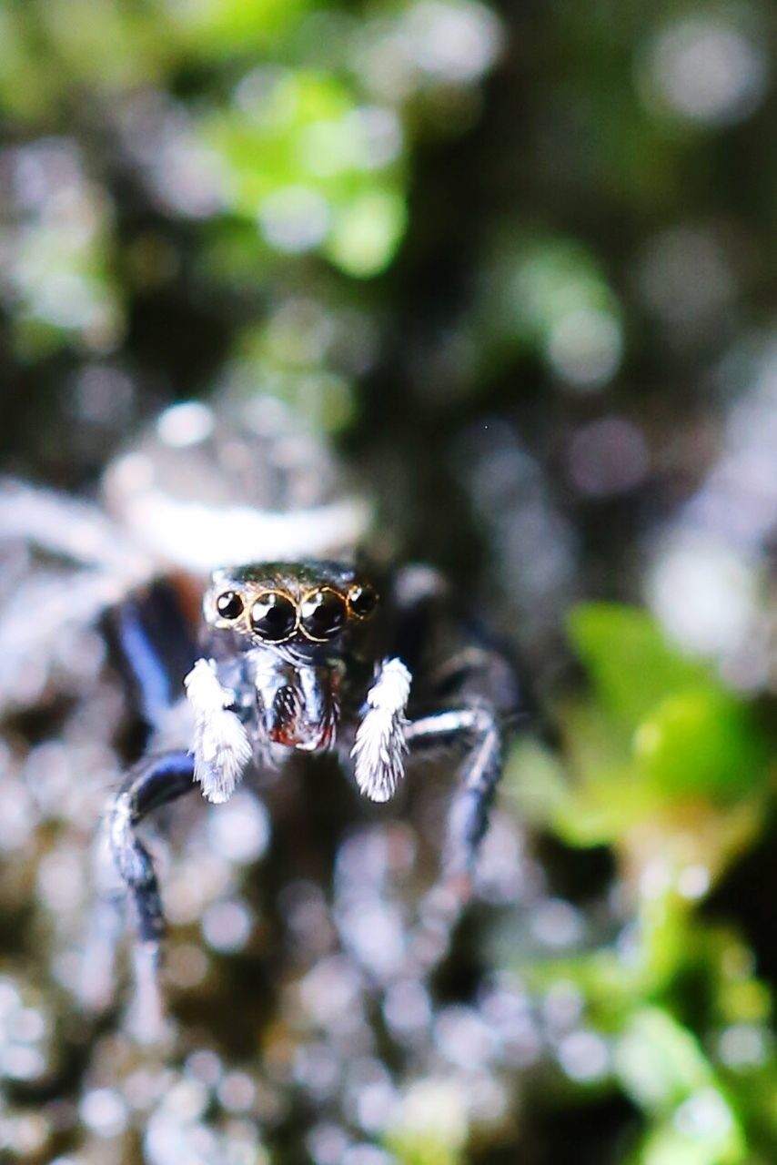 animal themes, one animal, day, animals in the wild, nature, outdoors, insect, close-up, no people, beauty in nature, tree