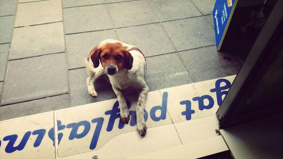 Cute Dog Dogstagram
