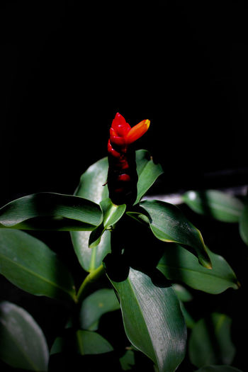 The Last One to Bloom Last Flower To Bloom Before Winter Light Nature Beauty In Nature Flower Flower Head Lonely Plant No People Red Flower Shadows First Eyeem Photo