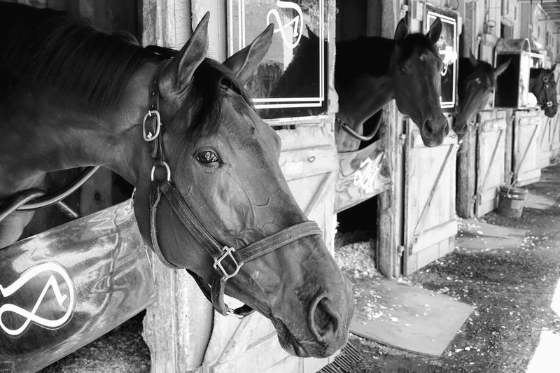 Mr. Ed Animal Themes Barn Close-up Horse Horse In Background Mammal No People One Animal Race Horse Rain Stables