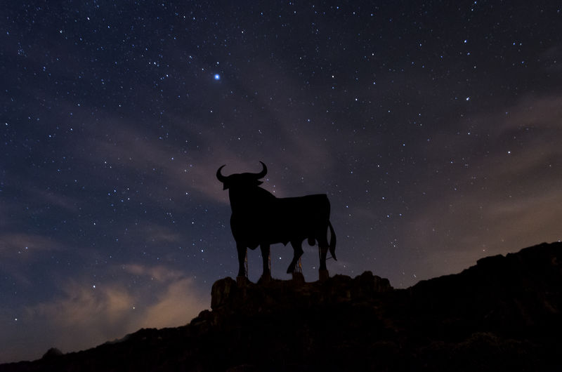 Low angle view of silhouette horse against sky at night
