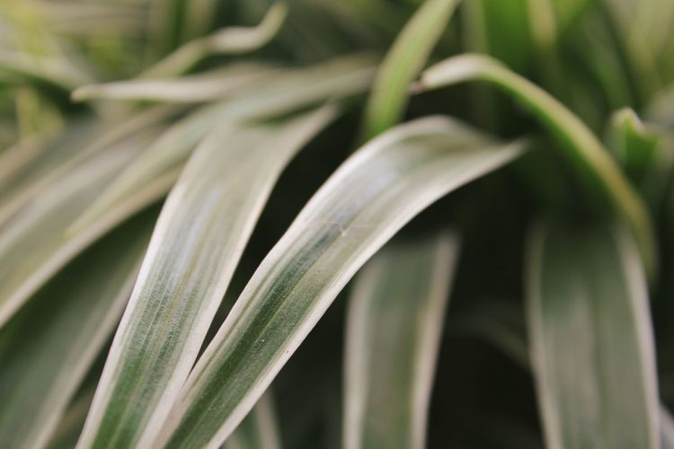 Green Color Plant Growth Nature Close-up No People Leaf Springtime Freshness Fragility Outdoors Day Beauty In Nature Flower Nature_collection