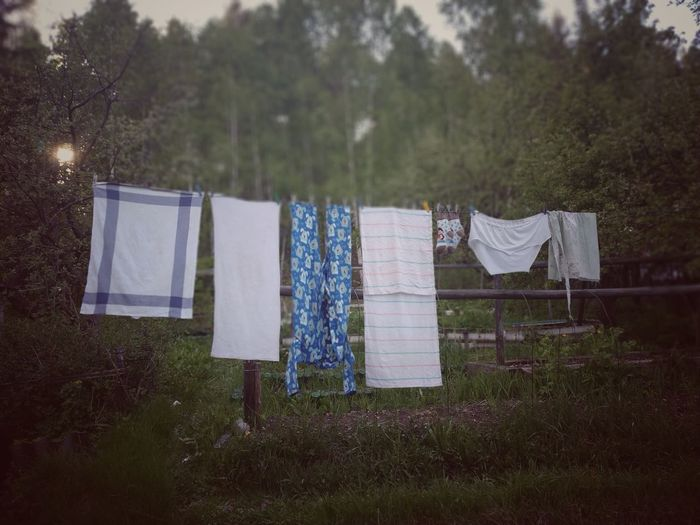 Dry clothes Tree Drying Hanging Clothesline Clothing Grass