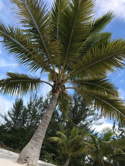 Palmtree Palm Tree Tree Tropical Climate Low Angle View Palm Leaf Sky Vacations Nature Scenics Tree Trunk Beauty In Nature Travel Destinations Travel Adventure No People Tranquility Leaf Cloud - Sky Day Summer