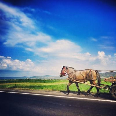 Another horsemobile in Romania. Romania Igers IGDaily Jj  Instagood Igscout Instaaaaah Instagramhub Sky Jj_forum Animal The_guild Landscape Primeshots Green Photosfans Horse Gmy Photooftheday Instamillion Wagon  Jj_forum_0427 GCS