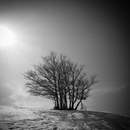 Arbre , colline de Beauregard , 2015 Shades Of Winter