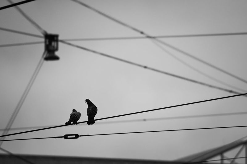 Pigeons Perching On Cable Against Sky