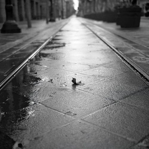 Alone in the rain. Shot with a Hasselblad 500C, Ilford Delta 400, developed locally, scanned personally. Thedarkroomlab_bwfilm Ilforddelta Film Filmisnotdead Ishootfilm Staybrokeshootfilm Film Hasselblad500c Hasselblad Christianmurphyphotography Filmphotography Nofilter Igmasters IGDaily Photographersofinstagram