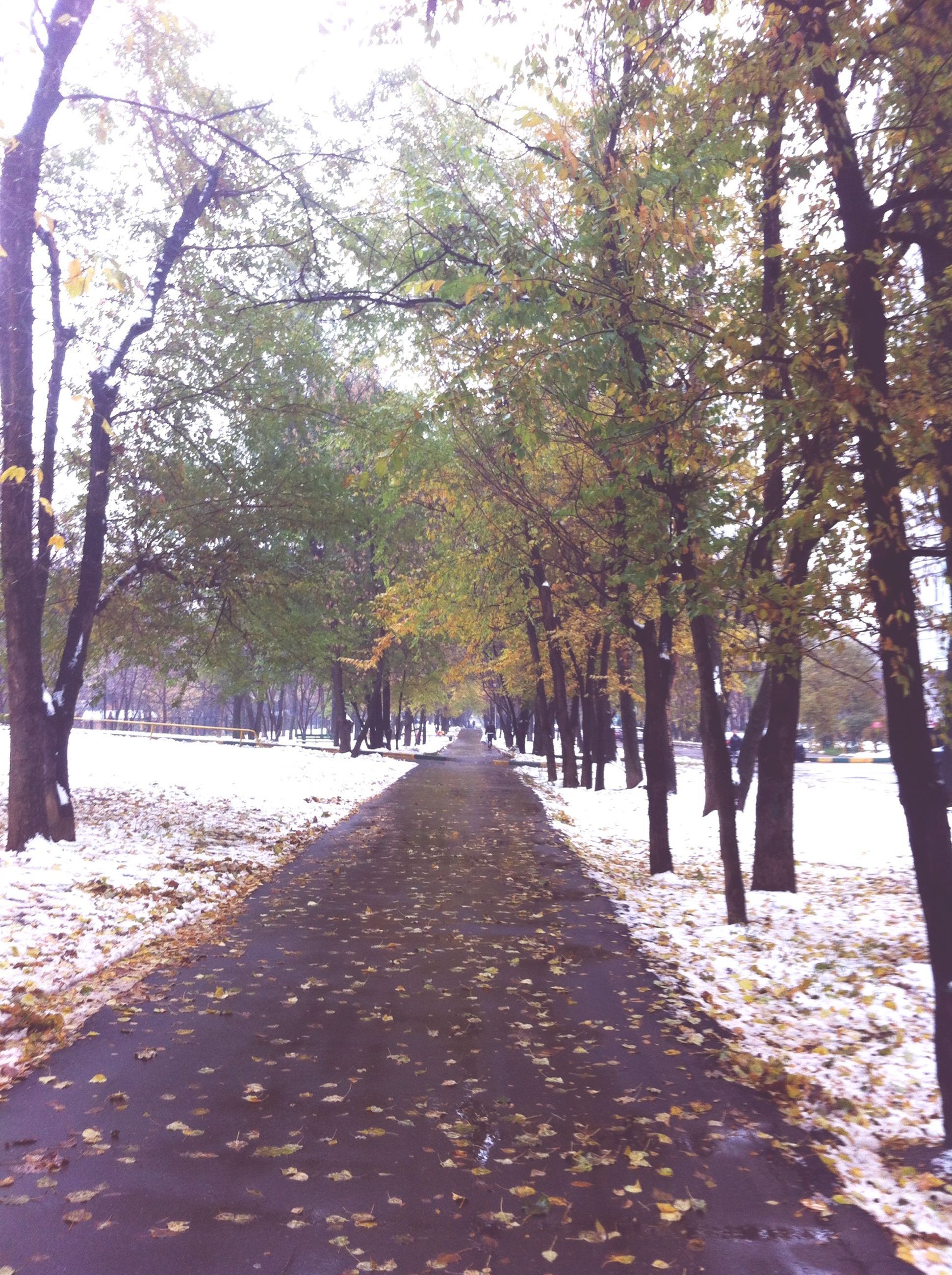 tree, the way forward, diminishing perspective, treelined, road, vanishing point, tranquility, transportation, season, nature, tree trunk, tranquil scene, growth, street, winter, beauty in nature, forest, snow, cold temperature, footpath