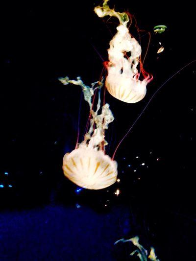 Jellyfish Vancouver Aquarium